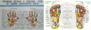проекции внутренних органов на стопе и ладони биологически активные точки