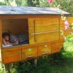 сон на улье с пчелами