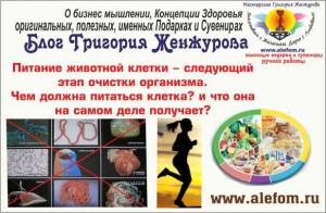 Питание животной клетки