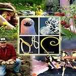 паразиты, грибы, бактерии, вирусы