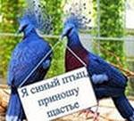 как поймать синюю птицу