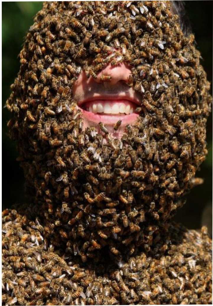 пчелы на лице